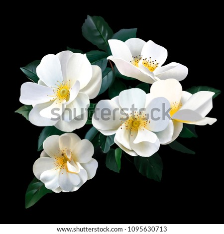 Bouquet luxurious white roses on black stock illustration 1095630713 a bouquet of luxurious white roses on a black background rose is a true queen mightylinksfo