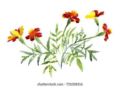 A bouquet of marigolds, watercolor sketch