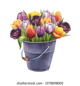 Bouquet of multicolored tulips in a vintage metal bucket. Watercolor illustration of a bunch of flowers isolated on white background. Spring concept for greeting cards, prints