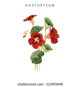 Bouquet of nasturtium, watercolor, can be used as greeting card, invitation card for wedding, birthday and other holiday and  summer background.