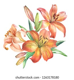 bouquet of orange lily.watercolor