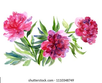 Bouquet of peonies, watercolor painting on white background.