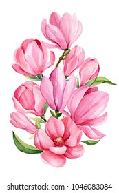bouquet pink magnolia flower on isolated white background, watercolor illustration