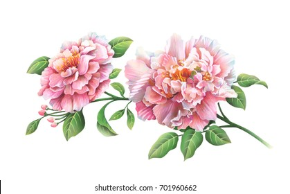 Bouquet of pink peony flowers.Hand drawn watercolor & airbrush painting on white background..Clipping path included. Illustration for greeting cards, invitations, and other printing projects.
