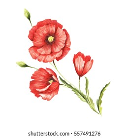 Bouquet with poppies. Hand draw watercolor illustration.