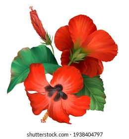 Bouquet of realistic tropical red hibiscus flowers isolate on white background