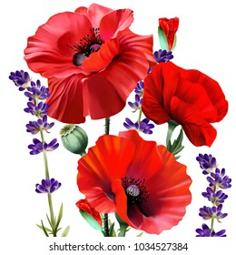 Bouquet of red poppies, with lavender flowers, over white background. Ready greeting card. You can also use individual elements of the illustration