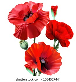 Bouquet of red poppies, on a white background, with leaves and buds revealing a new flower. Can be used as individual elements, or all elements together, for pattern or print