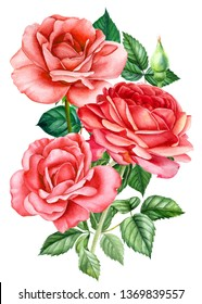 bouquet of red roses on an isolated white background, watercolor hand drawing, botanical painting
