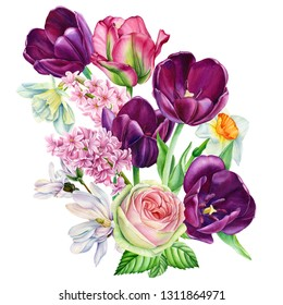 bouquet of spring flowers on an isolated white background, burgundy tulips, rose, magnolia, daffodils, hyacinths, watercolor illustration, botanical painting, hand-drawing