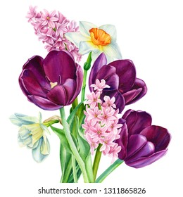 bouquet of spring flowers on an isolated white background, burgundy tulips, daffodils, hyacinths, watercolor illustration, botanical painting, hand-drawing
