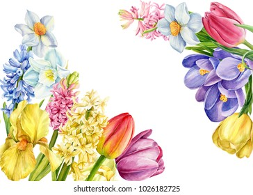 bouquet of spring flowers, a watercolor illustration, a botanical painting, a card with a place for text, iris,  crocus, hyacinths, daffodils, tulips