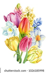 bouquet of spring flowers, a watercolor illustration, a botanical painting,  hyacinths, daffodils, tulips, postcard