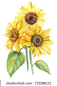 bouquet of sunflowers, watercolor botanical illustration