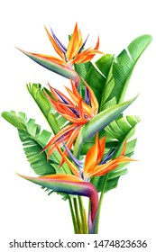 bouquet of tropical flowers and leaves, Strelitzia reginae on an isolated white background, watercolor tropical plants, botanical illustration, greeting card, bird-of-paradise