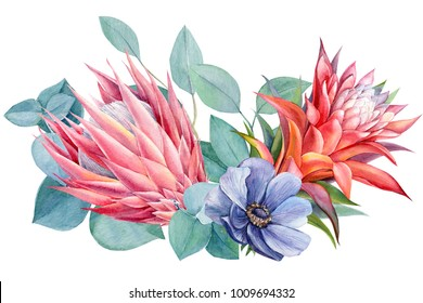 bouquet of tropical flowers, watercolor painting, hand drawing, guzmania,  protea,  eucalyptus leaves, anemone blue,