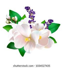 Bouquet of white Jasmine, in leaves and buds, with lavender, on white background. As a greeting watercolor illustration of the international women's day, and for any other holiday