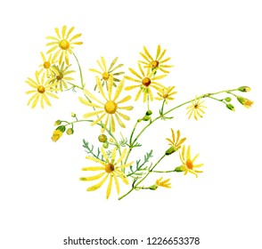 Bouquet of wild yellow daisies on a white background. For congratulations, invitations, Mother's Day, Weddings, Birthday