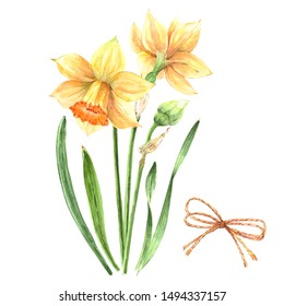 bouquet of yellow flowers daffodils on a white background, watercolor illustration