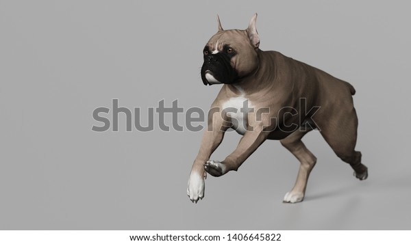 Boxer Dog Gallop Running Diagonal View Stock Illustration