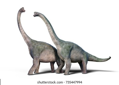 Brachiosaurus altithorax couple (3d render isolated on white background)