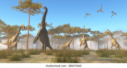 Brachiosaurus Browsing - A herbivorous sauropod dinosaur that lived in the Jurassic Age. A Brachiosaurus herd browse on tree tops as a flock of Pterodactylus flying reptiles fly overhead.