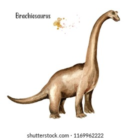 Brachiosaurus dinosaur. Watercolor hand drawn illustration, isolated on white background