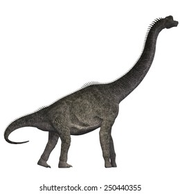 Brachiosaurus on White - Brachiosaurus was a herbivorous dinosaur that lived in the Jurassic Era of North America.