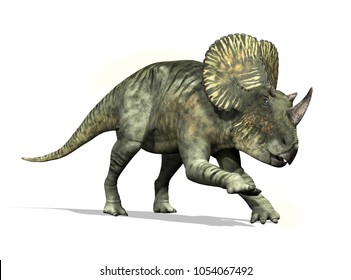 The Brachyceratops was a dinosaur that lived during the cretaceous period - 3d render.