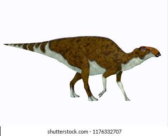 Brachylophosaurus Dinosaur Side Profile 3D illustration - Brachylophosaurus was a herbivorous Hadrosaur dinosaur that lived during the Cretaceous Period of North America.