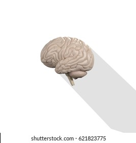 Brain infographic. Anatomical icon of brain on white background.3d Illustration.