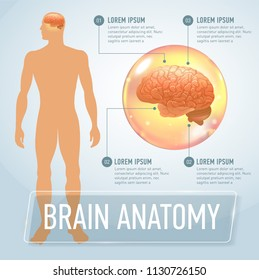brain infographics banner illustration