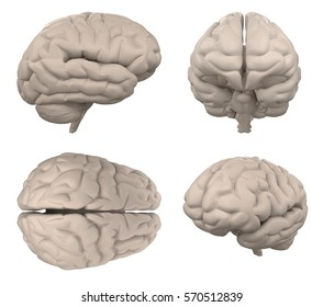 brain isolated on white top side view 3d rendering