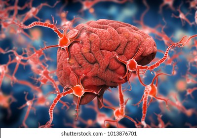 brain and nervous system, 3d illustration