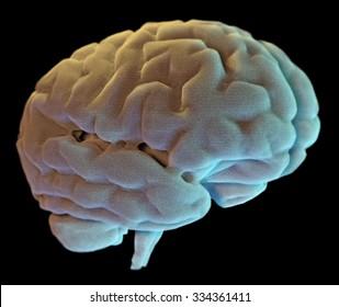 Brain neurons synapse, anatomy body, study, disease