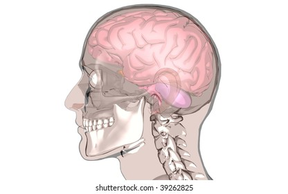 brain in a position to profile