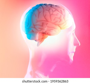 Brain potential. Ideas and innovation. Free your mind. Synapses and artificial intelligence. Cloud and globalization. 3d render. Human anatomy and brain, side view. Neurons