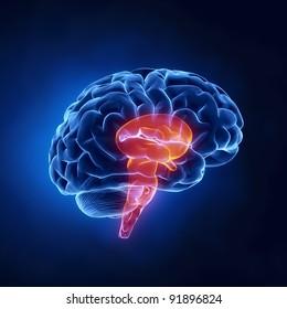 Brain stem in x-ray view
