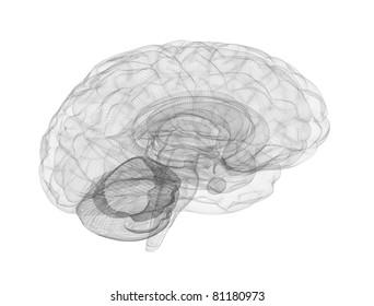 Brain wire frame model