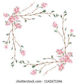 Branch of Cherry blossom , watercolor painting isolated on white background.