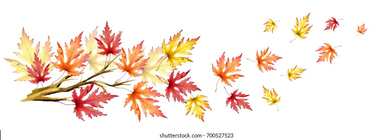Branch With Colorful Maple Leaves Autumn Wind Hand Drawn Watercolor Illustration