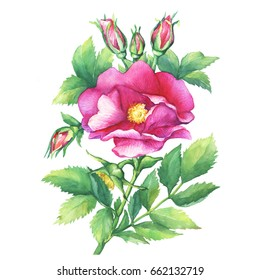 Flower to Dog Rose Images, Stock Photos & Vectors | Shutterstock