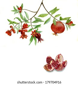 branch of a flowering pomegranate and opened the fruit