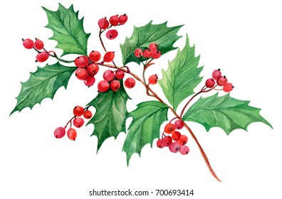 branch mistletoe isolated on white background watercolor hand painting