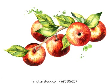Branch with red apples. Hand-drawn watercolor illustration