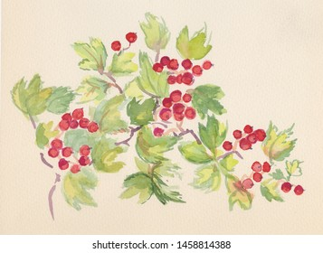 branch of red currant with berries