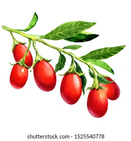 Goji Berries Watercolor Images Stock Photos Vectors Shutterstock