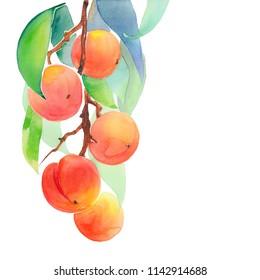 branch of ripe peaches, watercolor illustration
