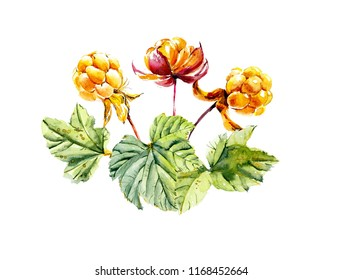 Branch wild cloudberry. Forest miniatures. Watercolor hand drawn illustration