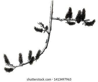 The branch of the willow drawn with graphite pencils and water-soluble graphite pencils.
